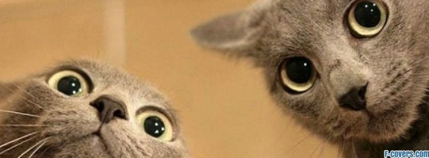 two-faced-cats-facebook-cover-timeline-banner-for-fb cat pics